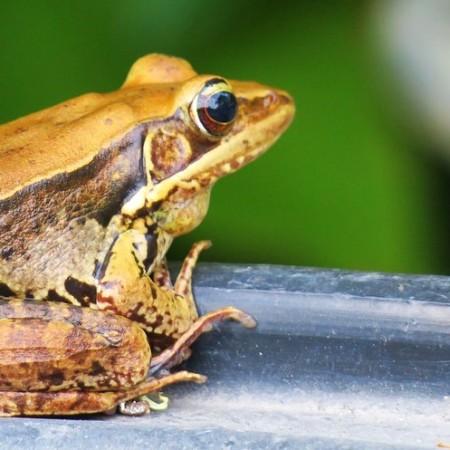 Pixabay image of frog