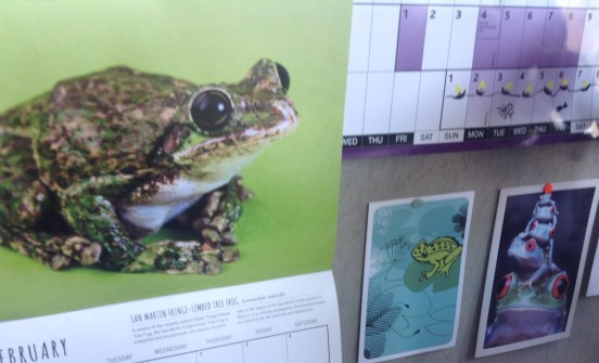 Photo of pin board pictures of frogs