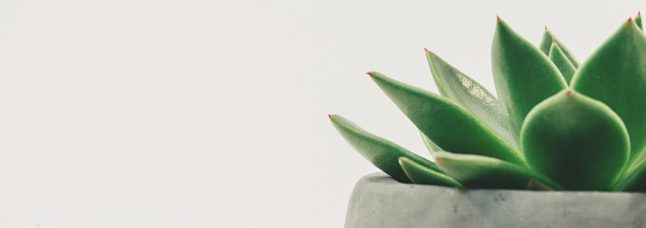 Pixabay image of succulent in pot
