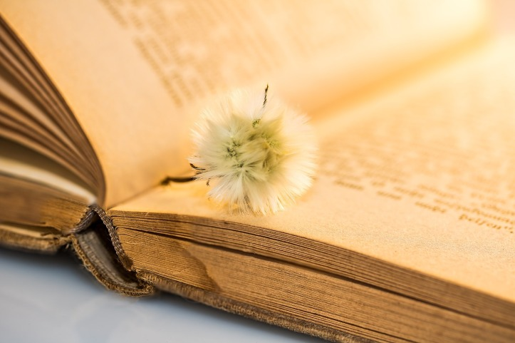 Small dandelion seed head on an old faded book